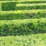 Die optimale Hecke
