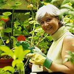 Pflanzpläne für Ihren Garten