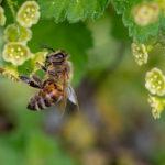 Köstliche Rezepte mit Bienenhonig
