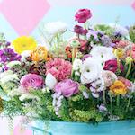 Frühlingsblumen schenken Energie