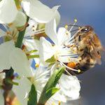 Garten-Paradies für Bienen und Hummeln