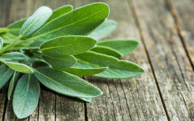 8 natürliche Hilfen in den Wechseljahren