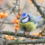 Vögel beobachten – Tipps für Einsteiger