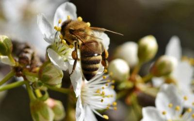 Ein Garten-Paradies für Bienen und Hummeln