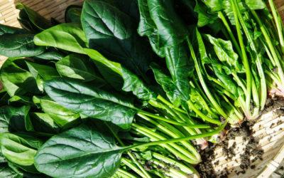 Spinat macht fit – Unsere Rezepte