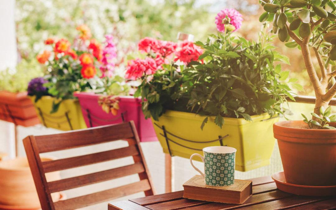 In 5 Schritten zum grünen Paradies auf kleinem Raum